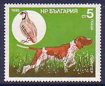 Pointer Dogs Bulgaria MNH stamp 1985