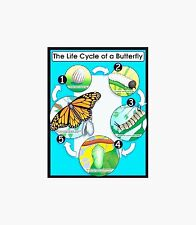 Life Cyle of the Butterfly Science  POSTER  Educational Classroom Poster Primary