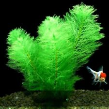 Landscape Simulation Artificial Plants Aquarium Decoration Water Grass Fish Tank