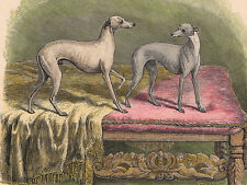 ITALIAN GREYHOUND CHARMING DOG GREETINGS NOTE CARD TWO BEAUTIFUL DOGS ON CHEST