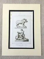 1830 Antico Stampa Antico Francese Stone Sculture Statue Caccia Cinghiale Cervo