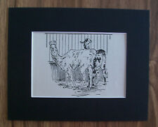 Llamas Print Winifred Austen 1935 Animal Bookplate 8x10 Matted Adorable Cuties