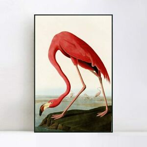 "Framed Canvas Giclee Print American Flamingo by John James Audubon 24""x32"""