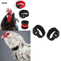 2 x colletto per gallo senza corvo, colletto per polli anti-gancetto per collo