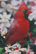 Feathered Garden Red Cardinal Spring Blossoms Small Flag