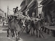 1928 Original INDIA Hyderabad Deccan Bullock Dray Street Cart Photo By HURLIMANN