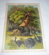 1878 chromo chromolithograph lithograph ~ Elephants Topple Tree With Man In It