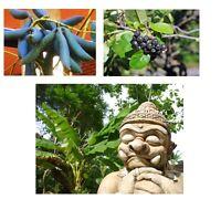 Diese drei Pflanzen sind selten schön und ungewöhnlich; auch winterfest