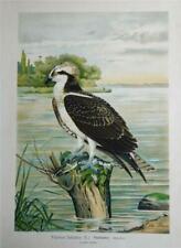 Antique (Pre - 1900) Realism Birds Art Prints