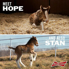 "Budweiser Beer Clydesdales Horses Baby Stan Hope  Fridge Magnet 4""x6""  Bar Decor"
