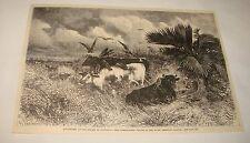 1880 magazine engraving ~ GARRAPATERO FALCON, Columbia