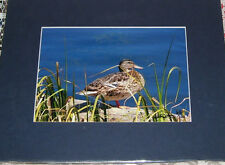 PHOTO ART DUCK ECHO LAKE MT EVANS CO 5X7 MATTED TO 8X10 SIGNED #'D 17/100