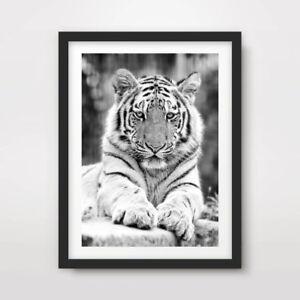 TIGER CLOSE BLACK WHITE ANIMAL WILDLIFE PHOTOGRAPHY ART PRINT Poster Artwork