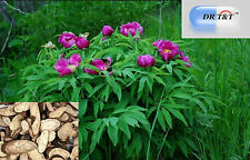 DR T&T 100 G erbe secche chi SHAO (radice paeoniae Rubra)/radice di peonia rossa
