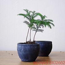 Succulent plants garden Bonsai Hydroponics Terracotta soil pot Ceramic flowerpot