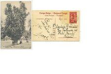 CPA PK AK CONGO BELGE No43 DRAGONNIER PRES DE MOPOLENGE 1923  ( PREO )