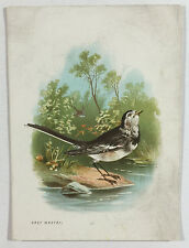 Antique Victorian Card with Grey Wagtail Bird Illustration