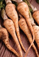 Organic non-gmo Parsley Hamburg Rooted 50+seeds parsnip-like roots vitamins A&C