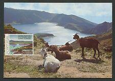PORTUGAL MK 1976 LAGO DO FOGO FAUNA ZIEGEN MAXIMUMKARTE MAXIMUM CARD MC CM d3228