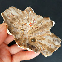 TOP152.1g Polished Petrified wood fossil Agate Branch Stand - Madagascar m110
