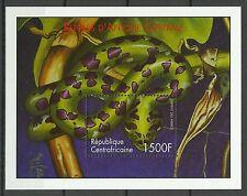 Centrafrique Serpent des Arbres Boomslang Venomous Tree Snake Schlange ** 2001