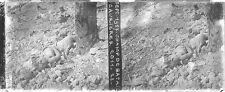 Champ de bataille Le Bois des Caurières sept 1917 Photographie stéréoscopique