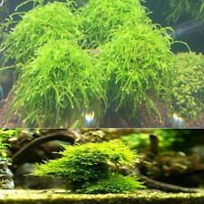 Natural Mineral Aquatic Bio Moss Ball Aquarium Crystal Shrimp House Fish Tank CO