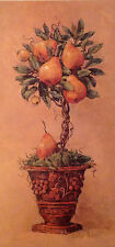 "Potted Pears Print. By: Barbara Mock. Open Edition.  13"" X 25"""