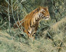 Wilhelm Friedrich Kuhnert Tiger Canvas 16 x 20   #3198