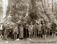 "Teddy Roosevelt at ""Grizzly Giant"", Big Trees, California - Historic Photo Print"