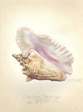 QUEEN CONCH SEASHELL orignal  limited edition SIGNED handworked print
