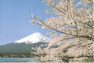 Greeting Card - Sakura, Mt.Fuji - Made In Japan New F/S