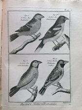 FRUSONE DEL BRASILE LUISIANA  Benard 1790 HISTOIRE NATURELLE Ornitologia Uccelli