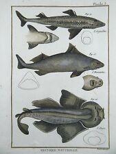 1790 FOLIO Bonnaterre DOGFISH ANGELSHARK ROUGH SHARK hand colored Engraving