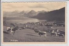 AK St. Gilgen, Wolfgangsee, Kuhherde, Foto-AK 1934