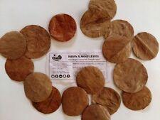 200 Premium Indian Almond Leaf HALOS | Catappa Ketapang | Naturally Aged & Dried