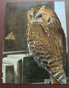 Various Bird Birds Postcards - Chris Shields - Unused c. 1990s - Choose One