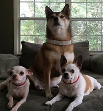 "Red Swarovski Crystal Rhinestone Dog Collar Dog Collar Fits 9-16"" Necks"