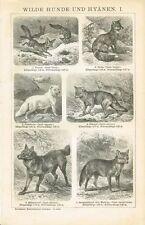 Tafel FUCHS / FENNEK / SCHAKAL / MÄHNENWOLF / POLARFUCHS 1894 Original-Holzstich