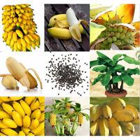 Trees Organic Yellow Banana Dwarf Bonsai Fruit Vegetable Sweet 100 Pcs Seeds