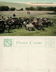 A BUNCH OF BRONCHOS IN THE NORTHWEST FARM SCENE ANTIQUE POSTCARD