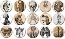"VINTAGE ANATOMY BONES SKELETON Lot of 15 Pin Back 1"" Buttons Badges (One Inch)"