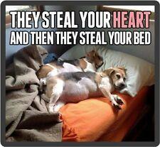 Funny Dog Beagles In Bed Refrigerator Magnet