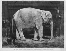 Elephant The Light Of Asia White Elephant From Siam On Exhibition Rare Animal