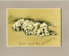 Lucy Dawson  ~ Sealyham Terrier ~  Colour Print Genuine Vintage 1937