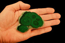 "Bulls Eye Malachite Polished Slice 3.5"" Natural Mineral Rock Mineral Specimen"
