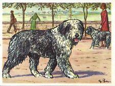 1952 Austria Tobacco Company Bildwerk Dog Art Print Card OLD ENGLISH SHEEPDOG