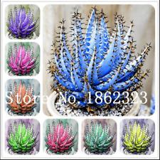 Aloe Bonsai Succulent 50 Pcs Seeds Plants Mini Home Garden Pot Perennial Cacti Z