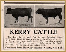 1911 Kerry Cattle Sale Cairnsmuir Black Baby Black Boy Print Ad