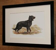 Gordon Setter print -12''x16'' frame - Joel Kirk prints, joel kirk dog print